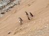 Penguins-on-hill